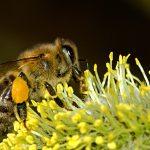 Kärntner Bienenwirtschaftsgesetz - K-BiWG; Meldung nach § 5 Abs. 2