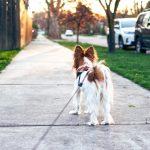 Informationen zur Leinenpflicht für Hunde in Kärnten