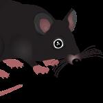 Rattenbekämpfung ist wichtig!